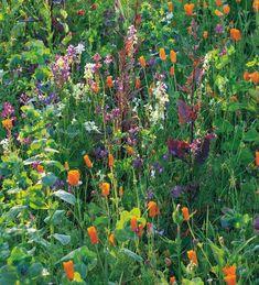 Home Flowers, Cut Flowers, Wild Flowers, Horticulture, Garden Plants, Indoor Plants, Snapdragon Flowers, Wild Flower Meadow, Meadow Flowers