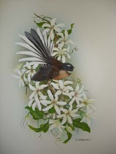 New Zealand fantail on clematis by janet marshall on ARTwanted New Zealand Tattoo, New Zealand Art, Bird Illustration, Botanical Illustration, Decoupage, Fairy Tattoo Designs, Altered Canvas, Nz Art, Maori Art