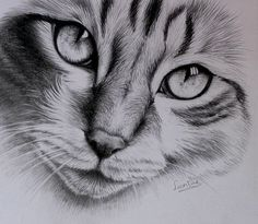 Cat finished by Horsenart95.deviantart.com on @deviantART