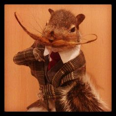 Sophistication is in the beard. Funny Animal Pictures, Funny Animals, Rockabilly, Bad Taxidermy, Pussycat Dolls, Super Cute Animals, Hamsters, Weird And Wonderful, Squirrels