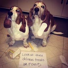 16+ Hilarious Dog Shaming Moments