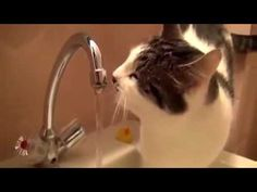 """Hilarious Cat Fails 