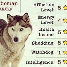 24 Best Husky Facts Images Doggies Funny Dogs Animal Babies