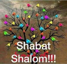Sabbath Rest, Happy Sabbath, Passover Images, Hebrew Greetings, Jewish Customs, Sabbath Quotes, Good Shabbos, Shavua Tov, Arte Judaica