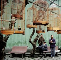 Birdcage Gathering Guangzhou 1989 by David G. #photography