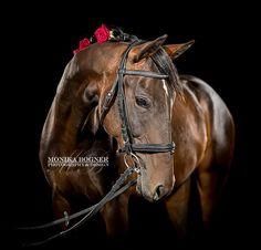 Monika Bogner-horse