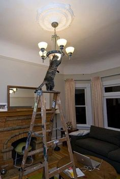 How many cats does it take to change a lightbulb...?