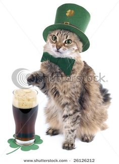 guiness cat