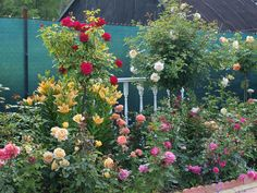 ВСЕ ДЛЯ ДОМА И ДАЧИ: Штамбовые розы
