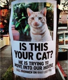But the Cat Came Back...haha. We have a few of these