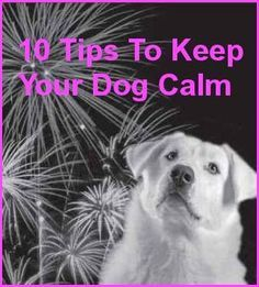 10 Tips To Keep Your Dog Calm During Fireworks This 4th of July ..