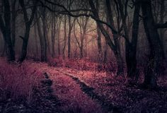 Mystical forest - The road going to the mystical forest.