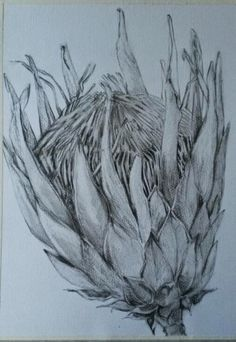 Fine Art by Melissa Von Brughan Durban based artist Botanical Drawings, Botanical Art, Botanical Illustration, Pictures To Paint, Art Pictures, Abstract Flowers, Art Flowers, Protea Art, Floral Drawing