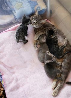 Paralyzed Stray Cat Survived Against All Odds So Her Kittens Could Live - Love Meow