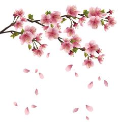 Beautiful Pink Spring Branch with Falling Petals PNG Clipart