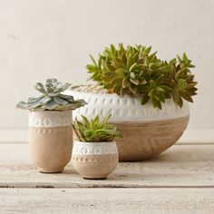 Etched with a woodblock pattern and topped with a crisp, white stripe, this earthenware bowl planter brings textured appeal to the garden.- A terrain Urn Planters, Indoor Planters, Beautiful Gardens, Beautiful Homes, Concrete Pots, Air Plants, Room Inspiration, Design Elements, Succulents