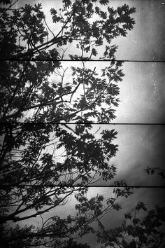 #Maine vista from Bar Harbor #Leaves #Trees Abstract by #dddagger, $30.00 #lomography #supersampler #film #photooftheday #blackandwhite #photography