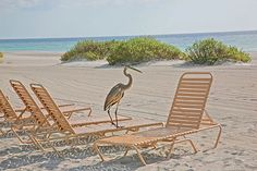1975 Gulf of Mexico Drive, #208 | Longboat Key Vacation Rental Property | Jennette Properties