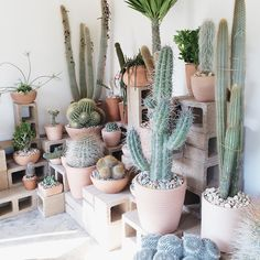 the cactus store : via almost makes perfect