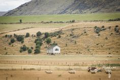 Farm on the way from Queenstown to Te Anau, South Island, New Zealand