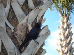 Orlando, FL  March 2013