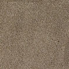 Stainmaster Donner Rectangular Indoor Tufted Area Rug (Common: 6 X 9;