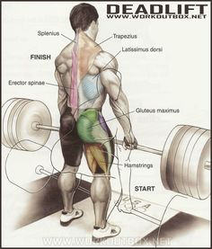How to Deadlift.As a 500lb drug-free raw Deadlifter who started his strength journey not even able to do a single Push-up, I've found correct technique to be crucial for Deadlifting big weights andeliminating lower back pain. Always start with the bar on the floor.Pulling from the safety pins is a…