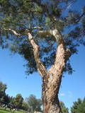 Signs of Faulting in a Tree