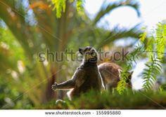 Mouse Lemurs are the world's  primates. - stock photo