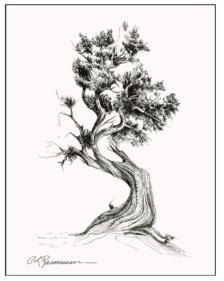 One trunk rep the woman, another trunk/separate tree representing the man. I would like a tatt of this to represent Cain and I Tree Drawings Pencil, Ink Pen Drawings, Cedar Trees, Cypress Trees, Demon Dragon, Bonsai Tattoo, Japanese Tree, Tree Tattoo Designs, Tree Artwork
