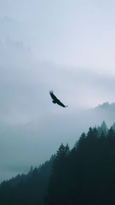 Eagle Flying Over Misty Forest Android Wallpaper