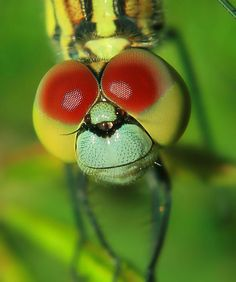 dragonfly eye color..  by  aziz fauzi rahmat