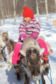 Reindeers in Nallikari Winter Village in Oulu, Finland