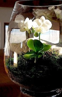 Learn how to make and care for terrariums - explore the best plants, moss, tools and techniques.