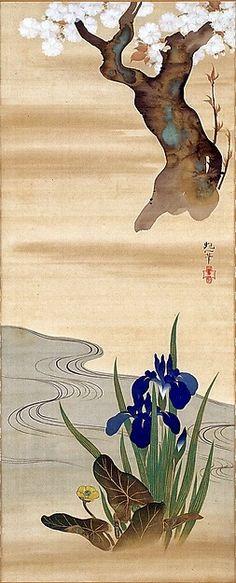 iris fugl