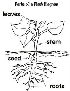 plant labeling worksheet freebie teach your students about the rh pinterest com simple plan diagram simple plant diagram to label