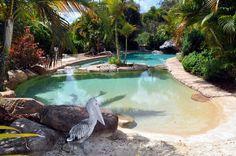 lagoon style pool with beach Concrete Pool, Dream Pools, Cool Pools, Pool Designs, Pool Ideas, Backyard Ideas, Swimming Pools, Outdoor Living, Spa