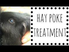 Hay Poke Treatment - YouTube