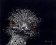 ღღ  Fantastic!!!     ~~~~   Emus In The Morning Mixed Media - Emus In The Morning Fine Art Print - Linda Hiller