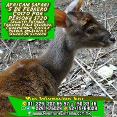 Este próximo 5 de febrero recuerda que tenemos la #excursión a #africamsafari no te quedes fuera Más información en: Tels: 01 (229) 202 65 57 y 150 83 16 PRIP ID: 52 * 15 * 64029 Cel - WhatsApp - Line - Google Allo: 2291476029 BB Pin #7A43560A Email / Hangouts: turismoenveracruz@gmail.com Link http://www.veracruzextremo.com/africamsafari.htm