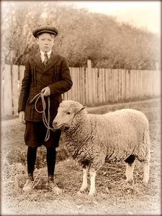 Boy and sheep, vintage photograph