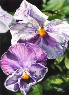 Pansies - colored pencil art by Dianna Soisson!