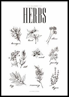 Plakat med urter, fin til køkkenet