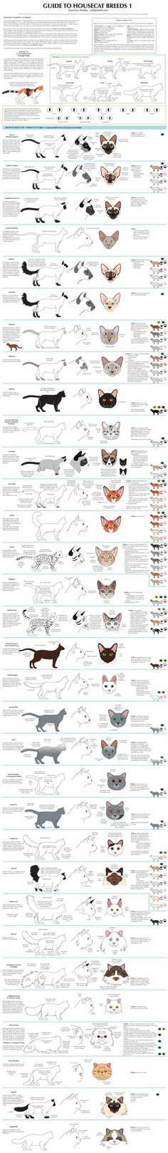 orig04.deviantart.net 0131 f 2016 063 c 8 guide_to_housecat_breeds_1_by_majnouna-d2rmfml.jpg