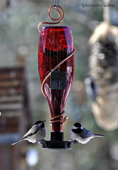 """Glass Bottle Bird-Feeder ~ """"The Bistro"""" Same folks with the DIY, 'cept you can purchase it if you don't want to make one."""
