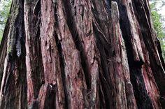 Image result for redwood bark