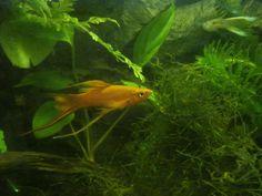 Aquariofilia- peixes ornamentais - Pesquisa do Google