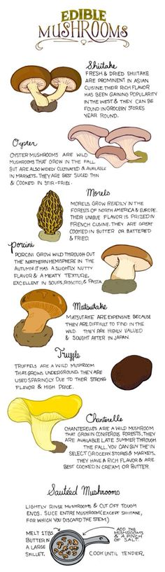 Survival tip know how to identify these edible plants to ensure safety. Discovering the value of edible plants for nutrition is also a good idea. Edible Mushrooms, Stuffed Mushrooms, Cook Mushrooms, Poisonous Mushrooms, Garden Mushrooms, Survival Food, Survival Skills, Survival Tips, Edible Wild Plants