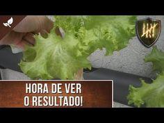 Como Fazer uma Horta Hidropônica – Panelaterapia