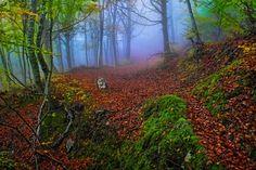 Autumn crossings by George Leontaras on Forest Mountain, Centaur, Autumn Day, Mythical Creatures, Digital Photography, Fairy Tales, Greece, My Photos, I Am Awesome